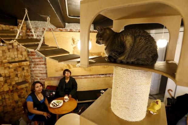 México tem restaurante vegetariano para amantes de gatos (Foto:  Edgard Garrido/Reuters)
