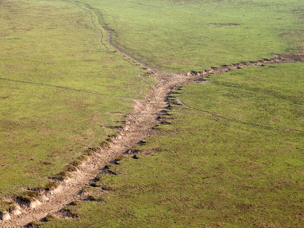 Manada causa destuição na vegetação da reserva florestal em Rondônia (Foto: Sedam/Divulgação)