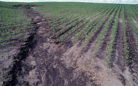 Erosão nos campos gerais em Ponta Grossa (PR) (Foto: Zig Koch - divulgação)
