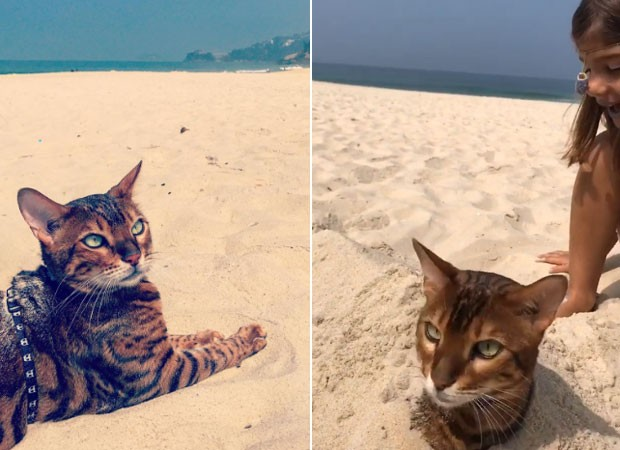 Sofia Marques com o gato (Foto: Reprodução)