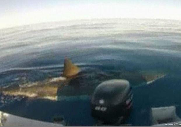Tubarão assustou pescadores ao nadar em torno de barco (Foto: Reprodução)