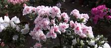 Dia das mães aumenta mercado de flores (Reprodução/ TV TEM)