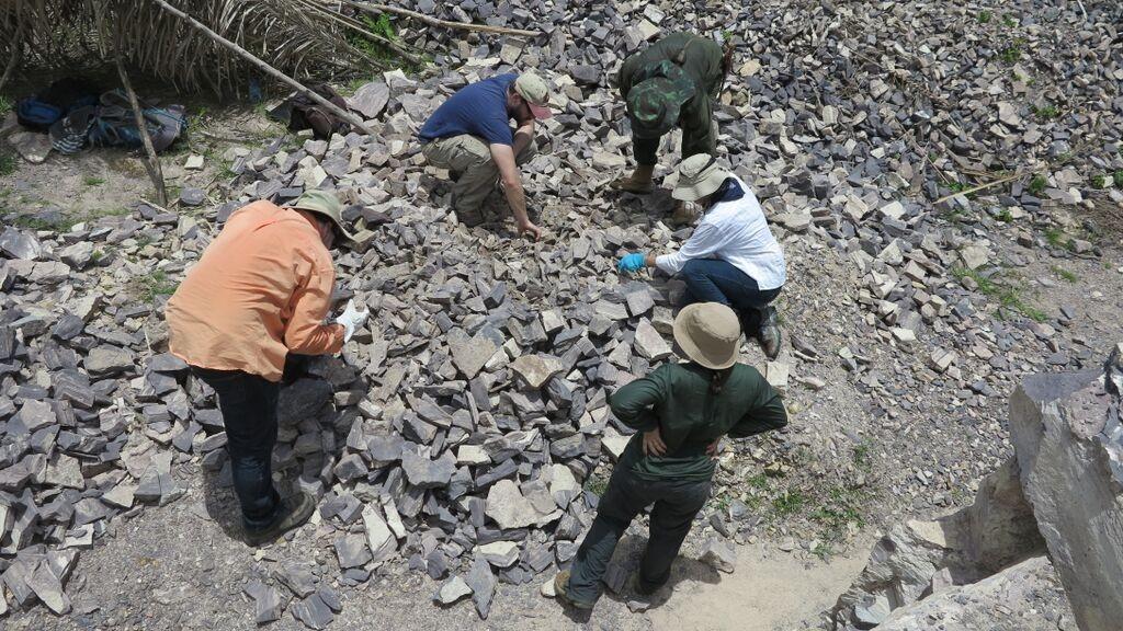 Equipe de campo procurando fósseis em Nazária, no Piauí (Foto: Kenneth Angielczyk)