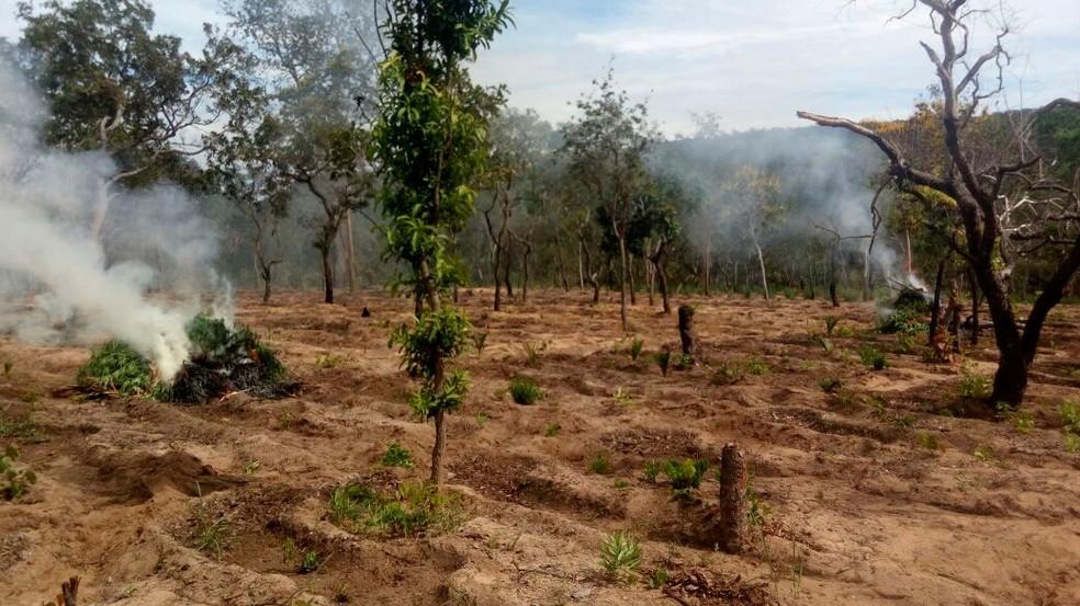 Droga foi incinerada durante operação da Polícia Civil (Foto: Polícia Civil/Divulgação)