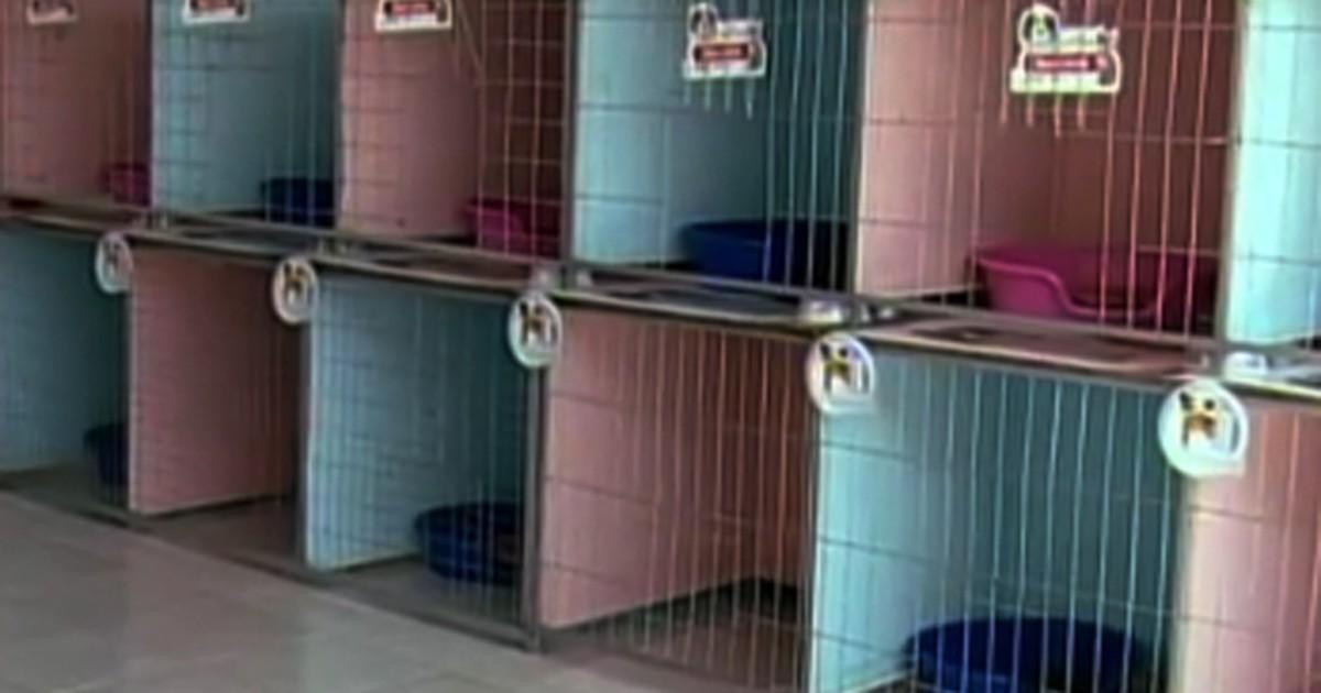G1 hot is caninos em divin polis s o op es durante for Hoteis zona centro com piscina interior