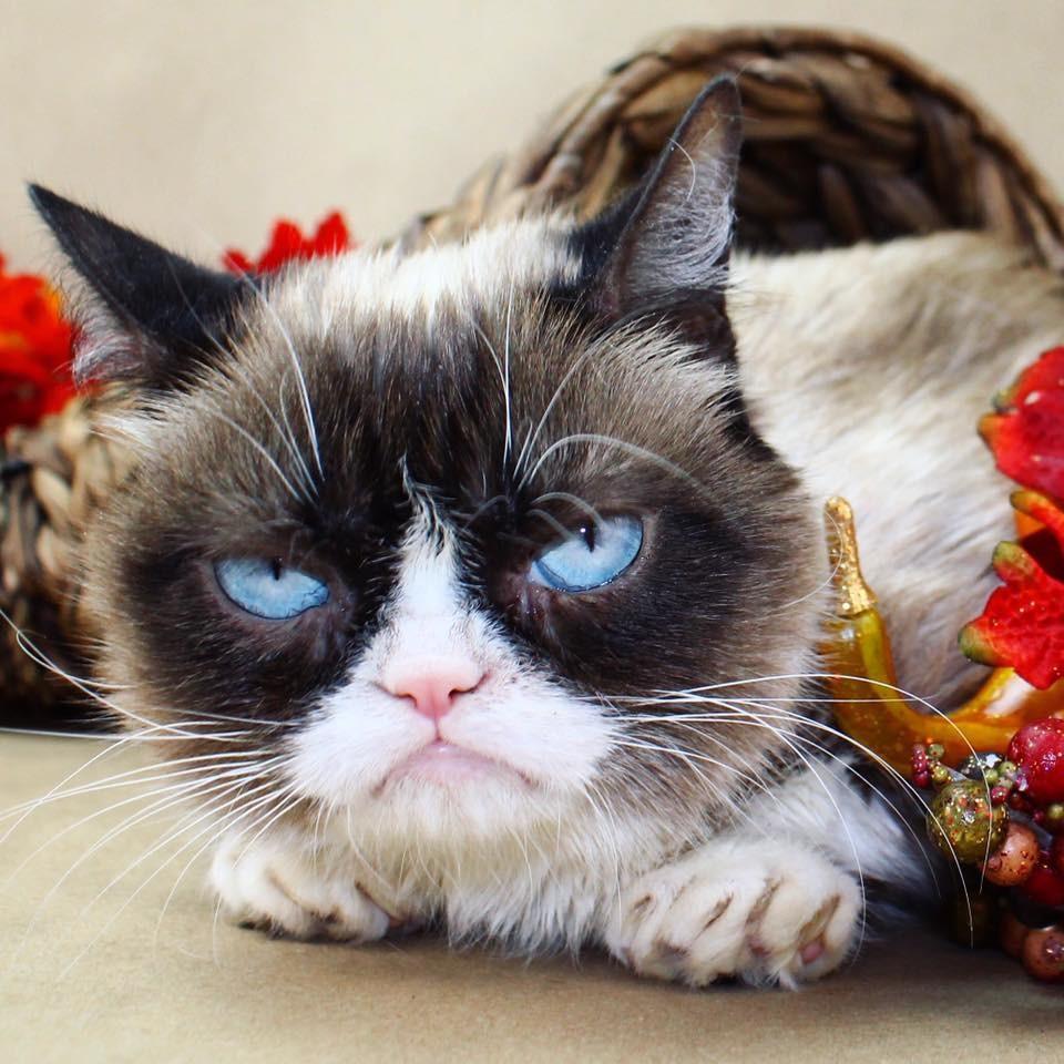 gato (Foto: Reprodução/Facebook/The Grumpy Cat)