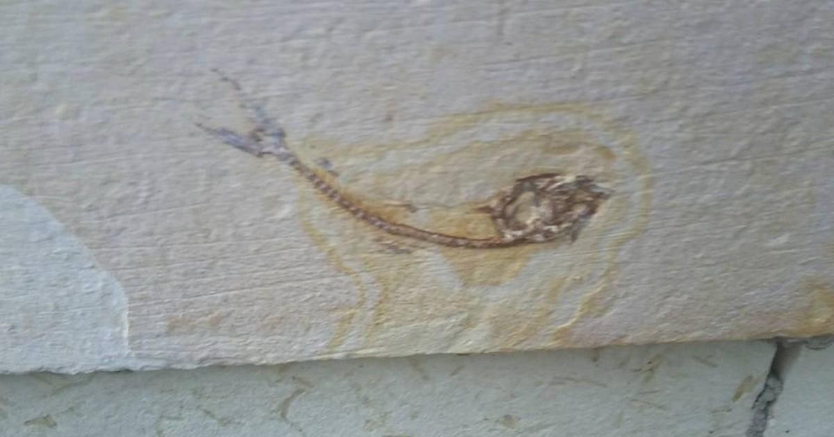 Morador encontra fósseis em muros de residências no Recife