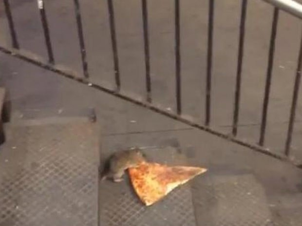 Rato foi filmado carregando pedaço de pizza no metrô de NY (Foto: Reprodução/YouTube/Matt Little)