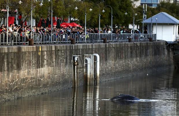Público se reúne para ver baleia em Puerto Madero, em Buenos Aires  (Foto: Reuters/Marcos Brindicci)