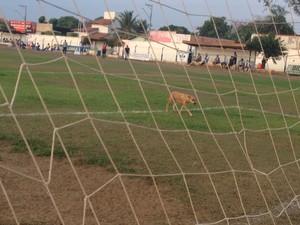 Invasão Cachorros (Foto: Vilma Nacimento/GloboEsporte.com)