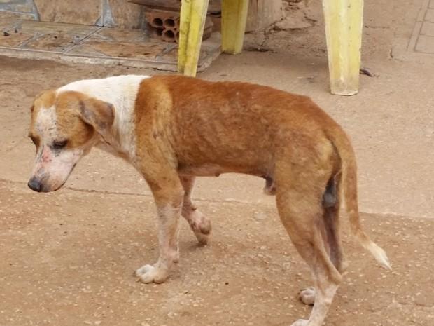 Cachorro abandonado em Porto Velho (Foto: Toni Francis/ G1)