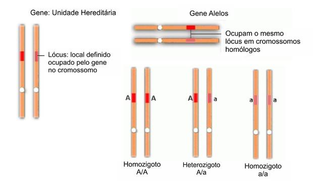 Conceitos básicos da genética (Foto: Colégio Qi)