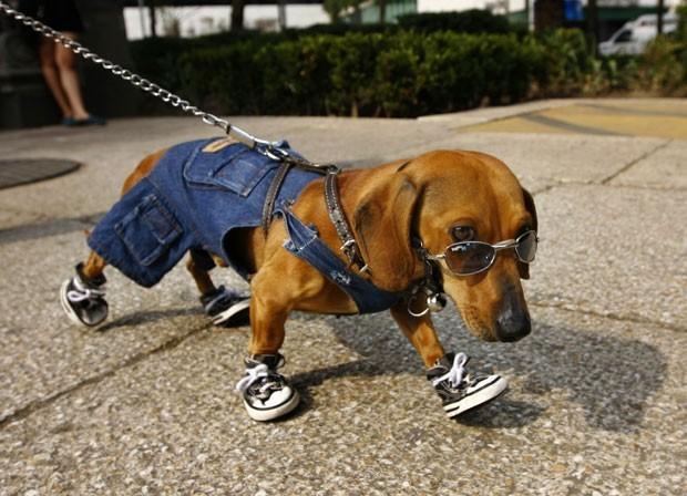 Em 2012, cão chamado 'Café' foi fotografado no México usando óculos de sol, tênis nas quatro patas e uma roupinha jeans. (Foto: Marco Ugarte/AP)