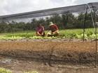 Pará tem o pior índice de desemprego no campo, diz Dieese