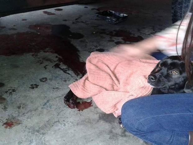 Cachorro atirado de viaduto gera revolta em Taubaté (Foto: (Foto: Arquivo Pessoal / Rosangela Vegana Coelho))