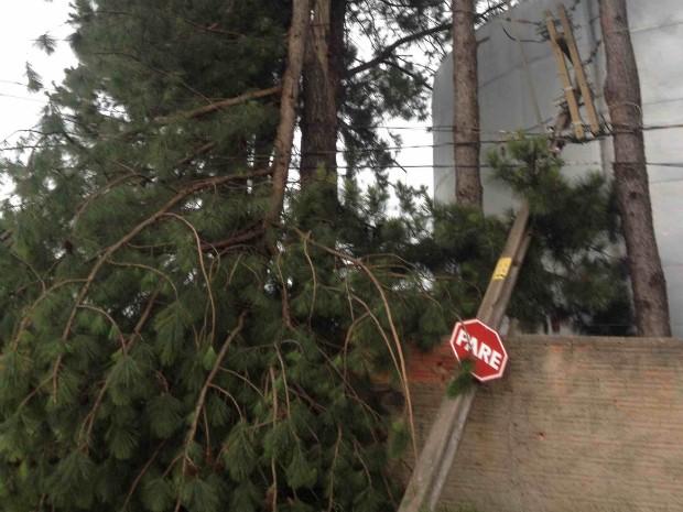 Árvore e poste caíram no Parque Industrial de Itapeva (SP) (Foto: Rodrigo Donizete / TEM Você)