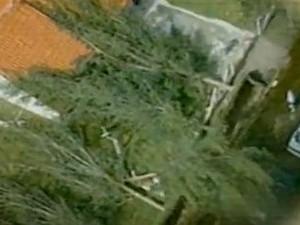 Árvores foram arrancadas e caíram em cima de casas (Foto: Reprodução/RBS TV)