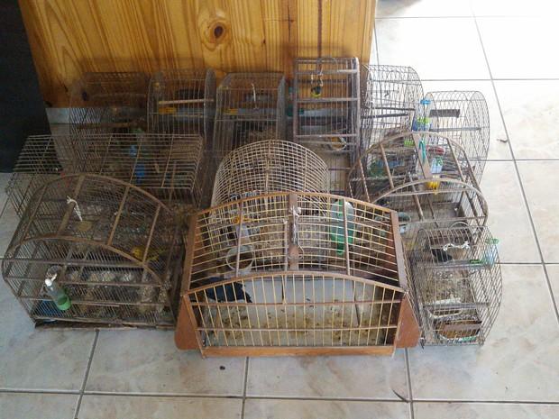 Aves apreendidas pela Polícia Ambiental em Santa Isabel (Foto: Divulgação/Polícia Ambiental)