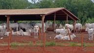 Pecuaristas confinam mais animais em Mato Grosso