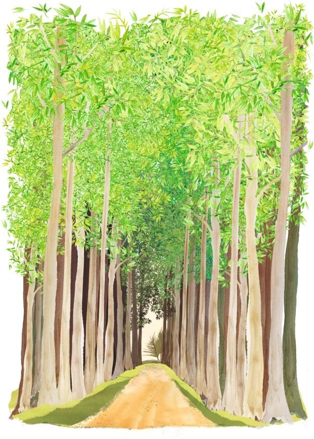 Ilustração coluna No Jardim de Ananda Apple - junho de 2017 (Foto: Ilustração Patrícia Sodré / Editora Globo)