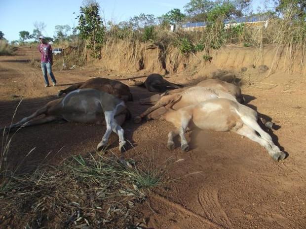 Seis mulas e jumentos morrem asfixiados em Talismã (Foto: Divulgação/Defesa Civil)