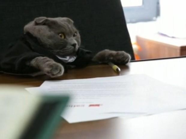 Gato venceu outros 700 candidatos em seleção para cargo de gerente de comunicação (Foto: Divulgação)