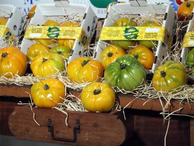 Tomates amarelos orgânicos chegam a pesar até 800 gramas (Foto: Jéssica Balbino/ G1)