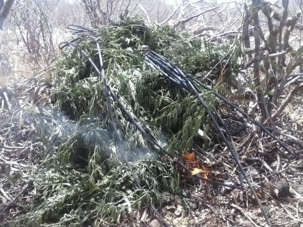 Polícia incinerou droga (Foto: (Foto: Divulgação Polícia Militar))