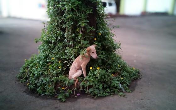 Cão sob uma árvore (Foto: Param6536 - Wikimedia Commons)