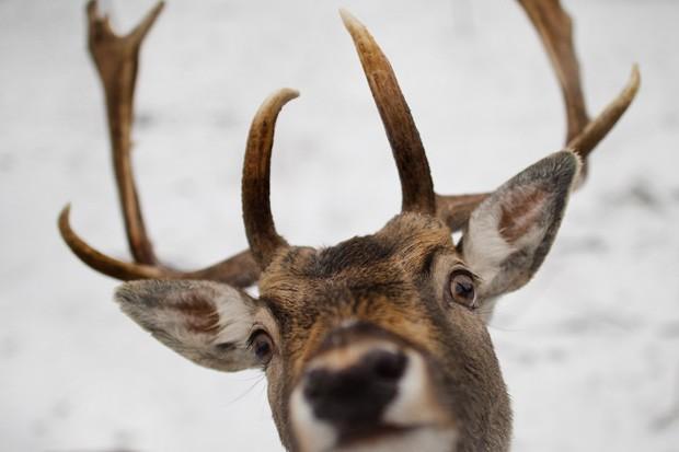 Já o outro animal parecia 'surpreso' com a presença do fotógrafo (Foto: Arno Burgi, DPA/AFP)