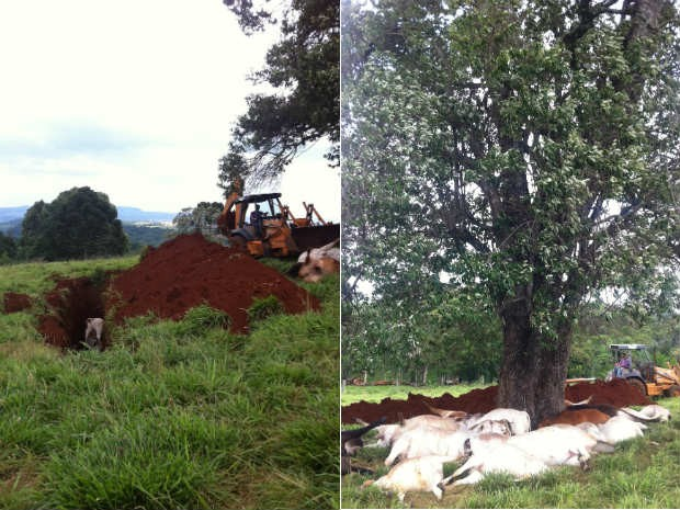 Animais foram enterrados nesta segunda-feira (Foto: Michelli Arenza/RPC TV)
