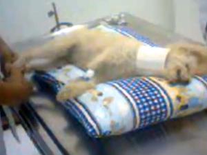 Procedimento estético terminou em morte do animal (Foto: Arquivo Pessoal)
