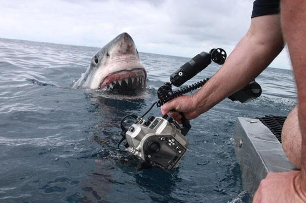 Equipe registra imagem impressionante de tubarão branco na Austrália (Foto: Reprodução/Facebook/Dave Riggs)