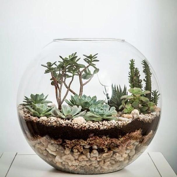 Terr rio um jeito pr tico de ter plantas em casa casa - Decoracion para terrarios ...