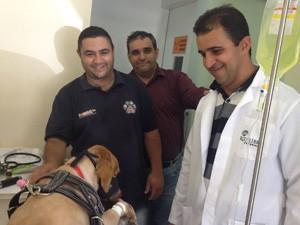 Tina está recebendo cuidados em um pet  shop de João Pessoa (Foto: Divulgação)