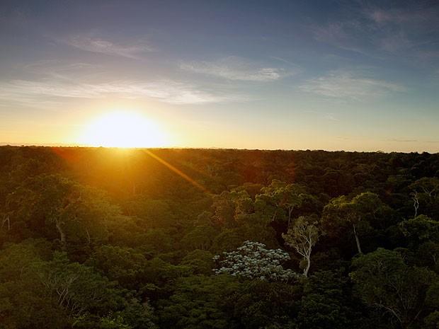 Reserva Natural Vale é uma das maiores áreas protegidas de Mata Atlântica do país (Foto: Agência Vale)