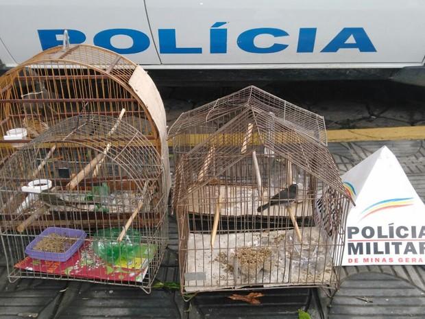 Quatro aves da espécie caleiro eram mantidas em cativeiro sem autorização (Foto: Polícia Militar/Divulgação)