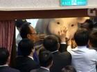 Manifestantes levam porco gigante para dentro do parlamento de Taiwan