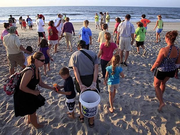 Tartaruga Carolina do Sul 3 (Foto: Randall Hill/Reuters)