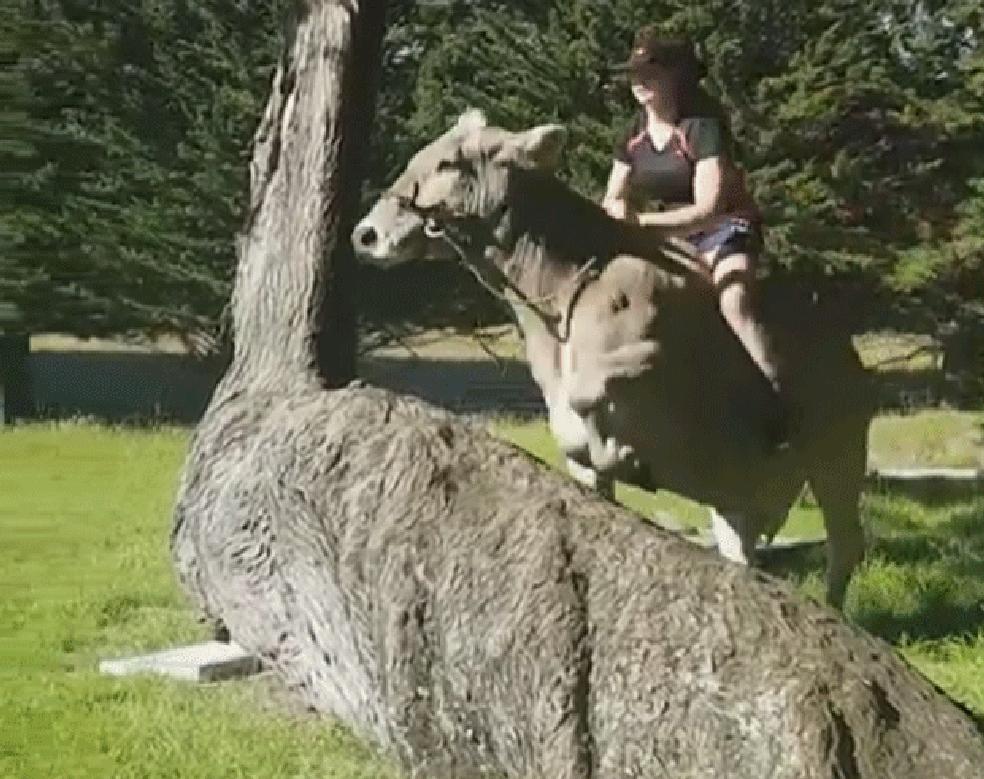 Neozelandesa faz sucesso na Web ao pular obstáculos montando vaca (Foto: hanney_simpson/Instagram)