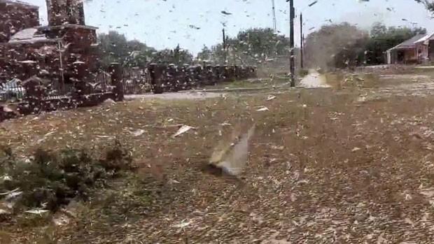 Uma invasão de gafanhotos destruiu milhares de hectares no sudoeste da Rússia e obrigou o Ministério da Agricultura do país a declarar estado de emergência na região de Stavropol (Foto: BBC)