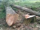 Lenhador corta árvore, é atingido e morre no Norte do Rio Grande do Sul