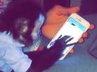 Latino mostra macaco de estimação ao celular: 'Já pode mandar nudes'