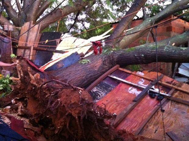 Árvore atingiu três casas em assentamento da Estrutural, no DF (Foto: Káthia Mello/G1)