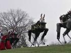 Robôs do Google fazem as vezes de renas natalinas
