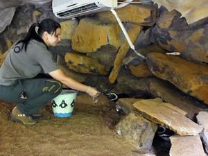 Nascimento duplo de pinguins-de-magalhães no Gramadozoo, RS (Foto: Halder Ramos/Divulgação)