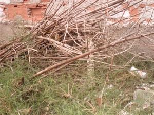 Moradores pagam pelo serviço de limpeza urbana (Foto: Arquivo pessoal)