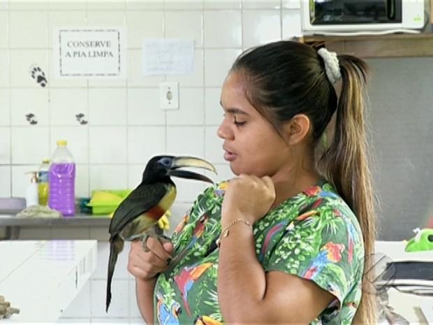 Projeto Murucututu recupera aves vítimas de maus tratos (Foto: Reprodução/TV Liberal)