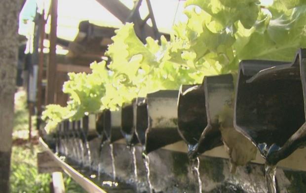 A reportagem mostra a técnica de agricultura que tem ganhado espaço no Acre. (Foto: Bom Dia Amazônia)
