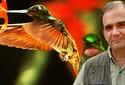 Beija-flor é ave de comportamentos curiosos